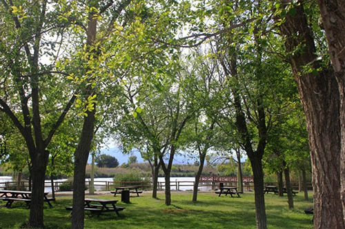 Picnic area in the shade
